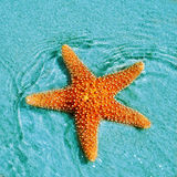 Seastar Royaltyfri Bild