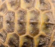 Closeup av ett sköldpaddaskal royaltyfri bild