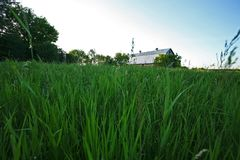 Closeup av fältet med ladugården Arkivfoto