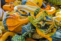 Closeup av färgrika kalebasser Royaltyfri Fotografi