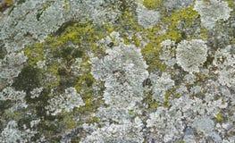 Closeup av färgrika laver och mossor royaltyfri bild
