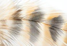 Closeup av fågelfjädern arkivbild