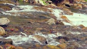Closeup av forsar Vatten som över flödar, vaggar på solljus Closeupbergflod stock video