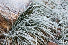 Closeup av frostigt gräs arkivfoton