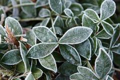Closeup av frostigt gräs royaltyfri foto
