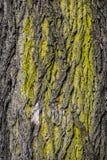 Closeup av gammal skällbakgrund Royaltyfri Foto