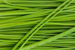 Closeup av gräslökar Arkivfoto