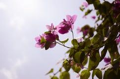 Closeup av härliga rosa blommor Arkivfoto