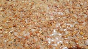 Closeup av havsbottnen arkivfilmer