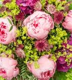 Closeup av härliga rosa pionblommor Arkivbilder