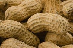 Closeup av jordnötter Arkivfoto