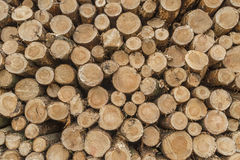 Closeup av journaler av träd i natur fotografering för bildbyråer