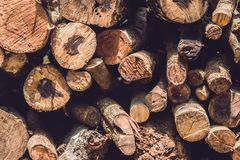 Closeup av journaler av träd i naturen, hög av träjournaler som är klara för vintern i skogen, vedträ som en waitin för förnybara royaltyfri foto