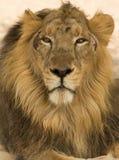 Closeup av konungen royaltyfri fotografi