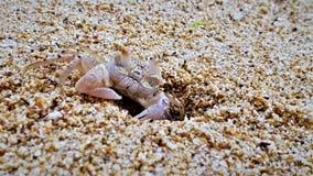 Closeup av krabban på stranden på den Mauritius ön fotografering för bildbyråer