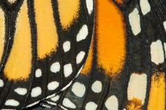 Closeup av monarkvingar royaltyfri bild