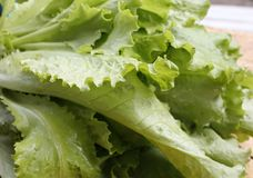 Closeup av ny grön grönsallat med vattendroppar royaltyfri bild