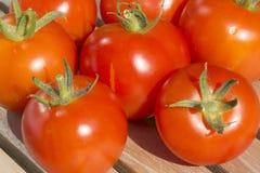 Closeup av nya organiska tomater Arkivfoto