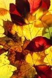 Closeup av olika Autumn Leaves Arkivfoto