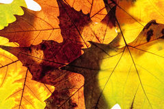 Closeup av olika Autumn Leaves Royaltyfri Bild