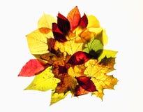 Closeup av olika Autumn Leaves Arkivfoton