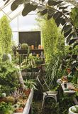 Closeup av olika växter i glashus royaltyfri fotografi
