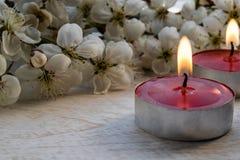 Closeup av röda stearinljus nära filialerna av vita körsbärsröda blomningar royaltyfri fotografi