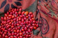 Closeup av ros-höft bär på tygterrakotta Royaltyfri Fotografi