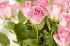 Closeup av rosa ro. Fotografering för Bildbyråer
