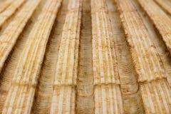 Closeup av seashel royaltyfri fotografi