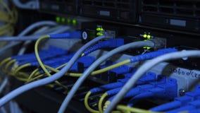Closeup av servermaskinvarutrådar stock video