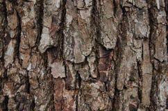 Closeup av skället på ett träd Royaltyfri Foto