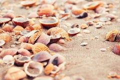 Closeup av snäckskal på en sandig strand Royaltyfria Bilder