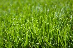 Closeup av snittgräs Arkivfoto