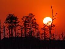 Closeup av solnedgången på den nationella djurlivfristaden för Blackwater i Maryland Arkivfoton