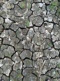 Closeup av torkaland arkivfoton