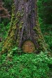 Closeup av trädet i trän med den felika dörren Royaltyfri Fotografi