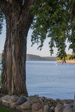 Closeup av trädet på sjön Pepin Fotografering för Bildbyråer
