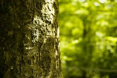 Closeup av Treeskället Arkivfoto