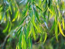 closeup av växten Royaltyfri Foto