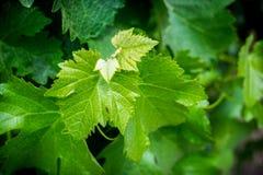 Closeup av växter Royaltyfri Bild