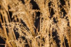 Closeup av växter i en parkera Royaltyfria Foton
