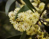 Closeup av vårblommor Arkivbild