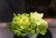Closeup av våt grön ny grönsallat i trädgårds- vatten Royaltyfria Bilder