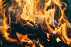 Closeup av vedträbränningen i utomhus- brand royaltyfri bild