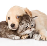 Closeup baby puppy dog and little kitten together. isolated Stock Image