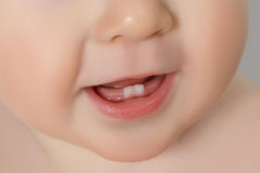 Closeup of a Baby teeth Stock Photography