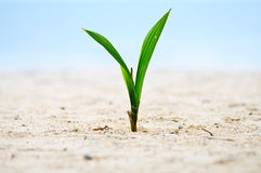 Closeup of baby tree on sand Stock Image