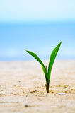 Closeup of baby tree on sand Royalty Free Stock Photos