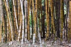 Closeup Background of Bamboo Patterns and Textures Stock Image